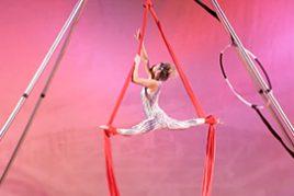 Circus Shows
